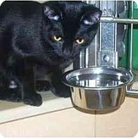 Adopt A Pet :: Velvet - Newburgh, NY