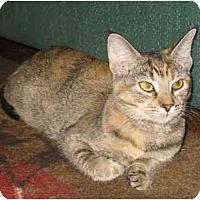 Adopt A Pet :: Jenesa - Acme, PA