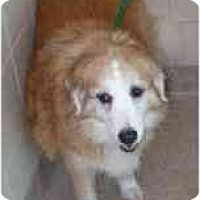 Adopt A Pet :: Callie - Emory, TX