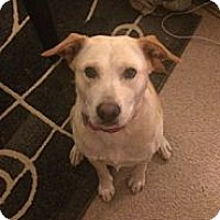 Adopt A Pet :: Ava - Washington, NC