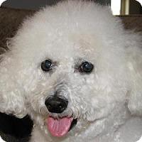 Adopt A Pet :: Sampson - La Costa, CA