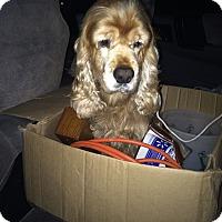Adopt A Pet :: ZELDA - Tacoma, WA