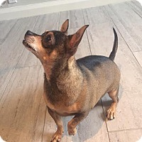 Adopt A Pet :: BRYCE - Los Angeles, CA