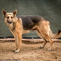 Adopt A Pet :: Jarred - Phoenix, AZ