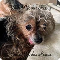 Adopt A Pet :: PJ - Visa, CA