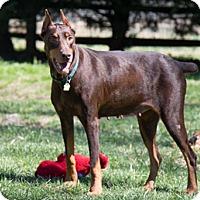 Adopt A Pet :: VALENTINA - Greensboro, NC