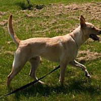 Adopt A Pet :: Polli (fostered in PA) - Cranston, RI