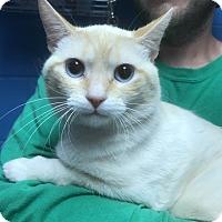 Adopt A Pet :: Caramel - Newport, NC