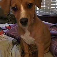 Adopt A Pet :: Oli - Acworth, GA