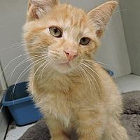 Adopt A Pet :: Reese - Massapequa, NY