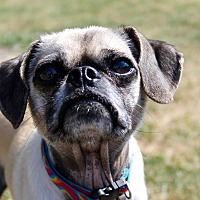 Adopt A Pet :: Tyler - Lake Odessa, MI