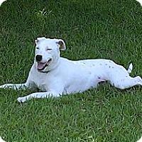 Adopt A Pet :: Sheba - Clinton, LA
