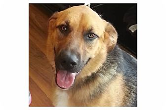 Shepherd (Unknown Type) Mix Dog for adoption in Pompton Lakes, New Jersey - Ruby