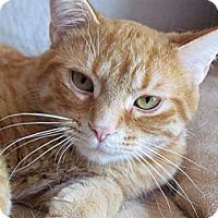 Adopt A Pet :: Rusty - Douglas, ON