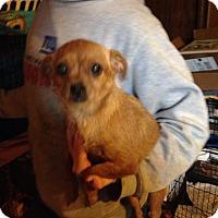 Adopt A Pet :: Gypsy - Albert Lea, MN