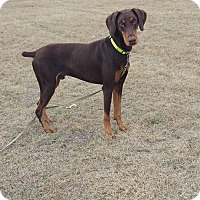 Adopt A Pet :: Rex - killeen, TX
