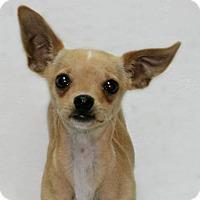 Adopt A Pet :: Boss - Lufkin, TX