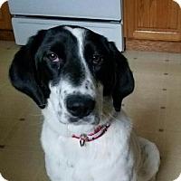 Adopt A Pet :: Miley-adoption pending - Schaumburg, IL