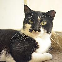 Adopt A Pet :: Audrey - Queens, NY
