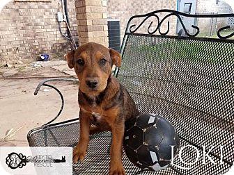 Shepherd (Unknown Type)/Husky Mix Puppy for adoption in DeForest, Wisconsin - Loki