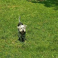 Adopt A Pet :: Splinter - Millersville, MD