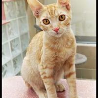 Adopt A Pet :: Marlon - Wickenburg, AZ