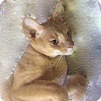 Adopt A Pet :: Ruby - Novato, CA