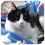 Photo 1 - Domestic Shorthair Cat for adoption in Macon, Georgia - Kate