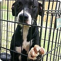 Adopt A Pet :: Roxy - Blanchard, OK