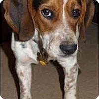 Adopt A Pet :: Blackie - Portland, OR