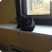 Adopt A Pet :: Midnight - Lancaster, MA