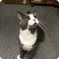 Adopt A Pet :: Joe Pesci - Richboro, PA