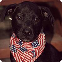 Adopt A Pet :: Theseus - Fredericksburg, VA