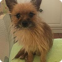 Adopt A Pet :: Tiny - Hazard, KY