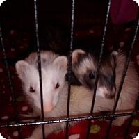 Adopt A Pet :: Minnie - Navarre, FL