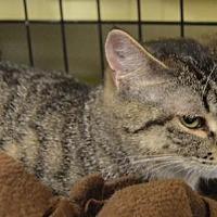 Adopt A Pet :: Gia - Logan, UT