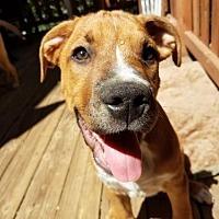 Adopt A Pet :: Sloan - Crestline, CA