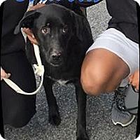 Adopt A Pet :: Brewster - Ahoskie, NC