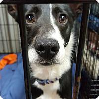 Adopt A Pet :: Hunter - Pottsville, PA
