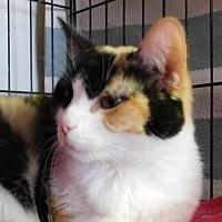 Adopt A Pet :: Cali - Winston-Salem, NC