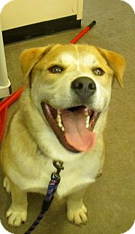 Mixed Breed (Large) Mix Dog for adoption in Lloydminster, Alberta - Carmichael