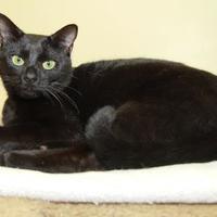 Adopt A Pet :: Spooky - Greensboro, GA