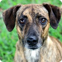 Adopt A Pet :: Shelby - Gulfport, MS