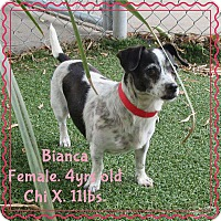 Adopt A Pet :: Bianca - Barriere, BC