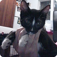 Adopt A Pet :: Shine - North Highlands, CA