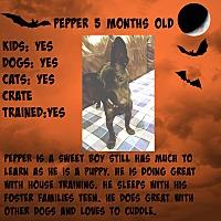 Adopt A Pet :: Pepper - Fredericksburg, VA
