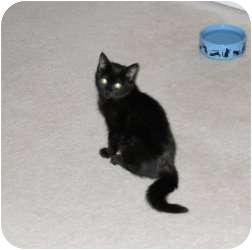Domestic Mediumhair Kitten for adoption in McDonough, Georgia - Joy Oh Joy