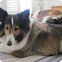 Adopt A Pet :: Princess - apache junction, AZ