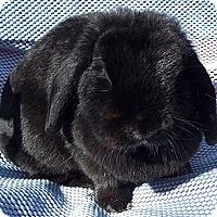 Adopt A Pet :: Shadow - Santee, CA