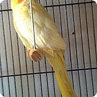 Adopt A Pet :: Addison - Lenexa, KS
